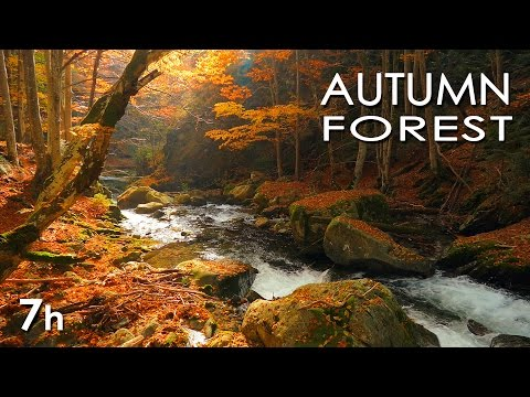 Autumn Forest - River Sounds - Relaxing Nature Video - White Water - HD - 1080p