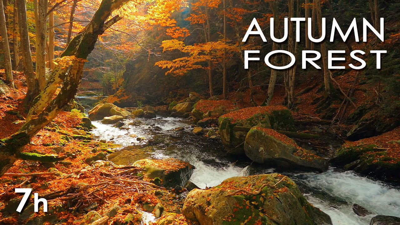 Autumn Forest Relaxing Nature Video River Sounds White Water