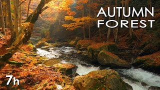 Autumn Forest - Relaxing Nature Video - River Sounds - White Water - HD - 1080p