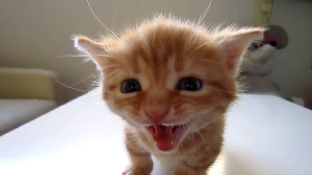 Как подружить кота с маленьким котёнком