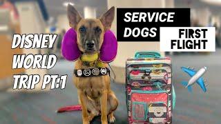 Service Dog's First Flight | Disneyworld Trip Day 1