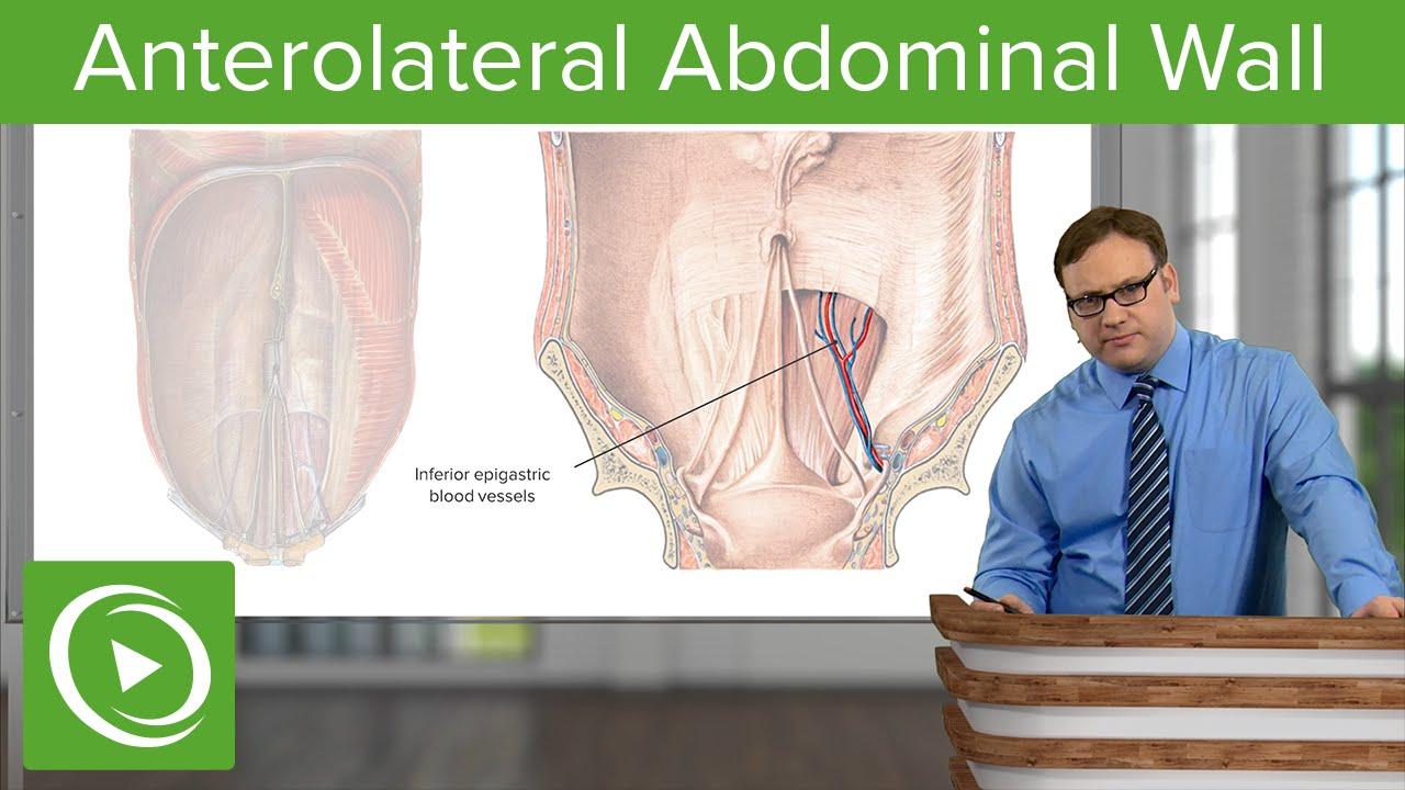 Anterolateral Abdominal Wall – Anatomy | Lecturio