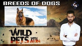 Breeds of Dogs | Wild Pets with Aun 25th August 2019