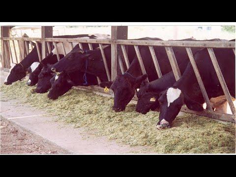 Curso Cana-Uréia - Alimento de Baixo Custo para Bovinos