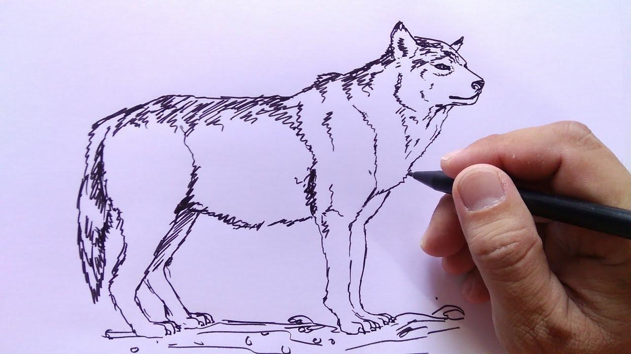 Cara Menggambar Serigala