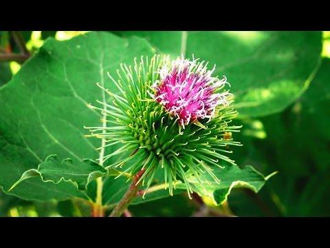 Полезные лекарственные растения фото, названия и описание