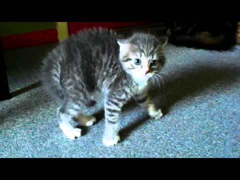Scared Kitten - YouTube