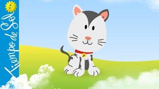Dúo Tiempo de Sol - El Gato Hace Miau