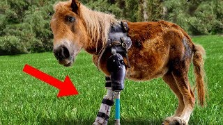 Amazing Animals With PROSTHETIC LIMBS!