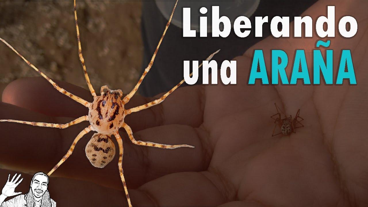 Liberando una Araña | #AbrilVideosMil | 17