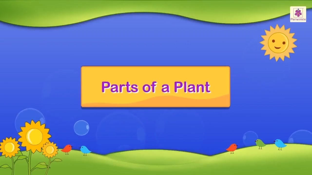 small resolution of Parts of a Plant   Science For Grade 3 Kids   #4 - YouTube