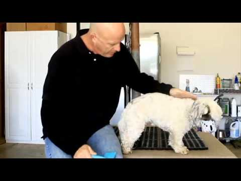 how to get a dog aggressive