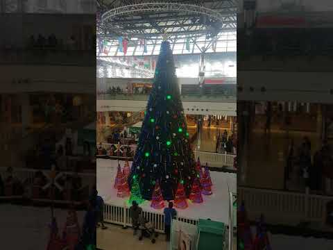 TREE AT MICROMALL GUAM