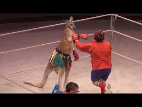 За кулисами цирка 1  Расследование Центра защиты прав животных ВИТА
