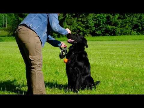 Geronimo the flatcoated Retriever have some Fun !! Filmed with the Fujifim X-T2.