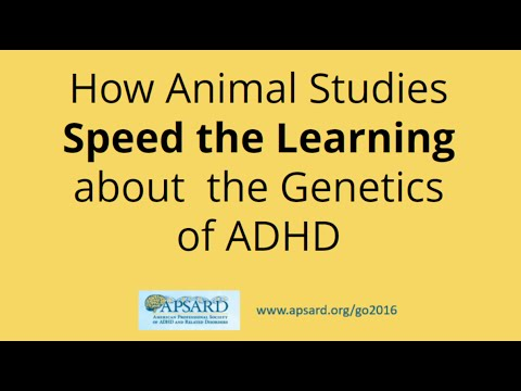 How Animal Studies speed the learning about the Genetics of ADHD , ADHD in Adults