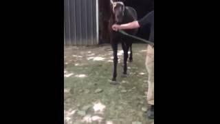 Скачать Strictly Formal Horse