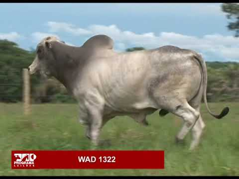 LOTE 74 - WAD 1322