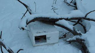 Ein Wimmern ertönt aus der schneebedeckten Schachtel. Beim Näherkommen wird dem Vater ganz anders.