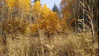 Autumn Sweet Golden Colors Of Trees And Herbs Free To Download