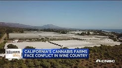 California cannabis farms are facing conflict in wine farm country