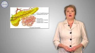 Биология 8 Нервная и гуморальная регуляции
