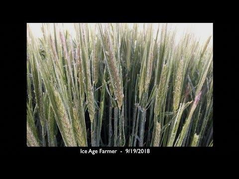ALERT: Food Shortages Growing - Media Hiding Crop Losses
