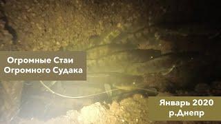 Подводная Охота Огромные стаи ОГРОМНОГО СУДАКА