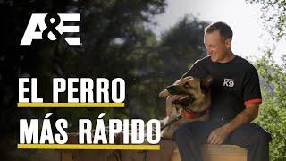 TOP DOG / Kai el perro maravilla