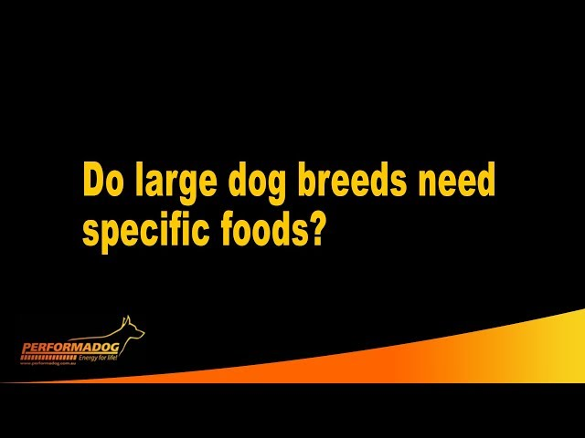 Do large dog breeds need specific foods?