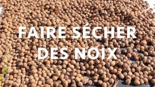 Faire sécher des fruits à coques : NOIX