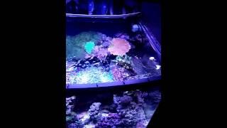 Evergrow led box aquarium light and diy stand