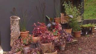 Composición floral en tonos fucsia con iresines - Decogarden