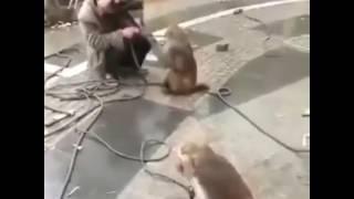 Maymun Kürtçe Dublaj Çok Komik