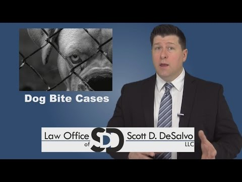 Dog Bite Lawyer - What To Do If You've Been Bitten