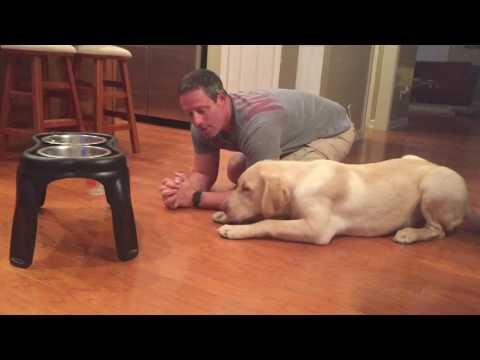 Bobby Gunther Walsh - Puppy prays before eating