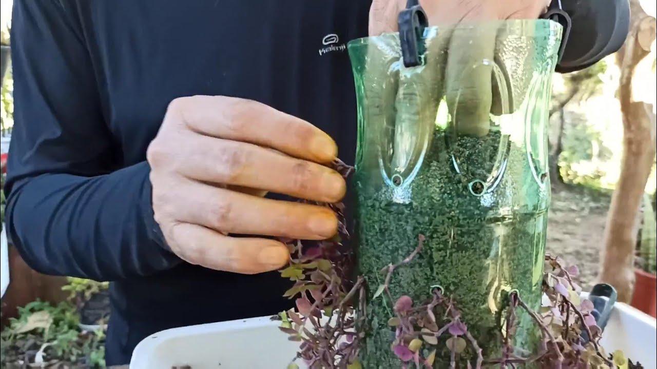 Ideia LINDA com GARRAFA PLASTICA para pendurar plantas DIY - Dinheiro em Penca ou Tostão