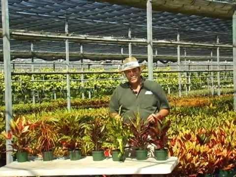 Croton Varieties.mkv