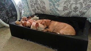 Diy Pet Bed/trundle  - Sugarstilettosstyle