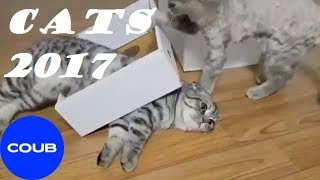 BEST COUB CATS#2 2017, Лучшие котики Coub#2 2017,