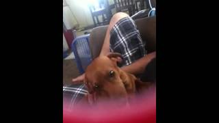 My Dachshund Trying To Say I Love You