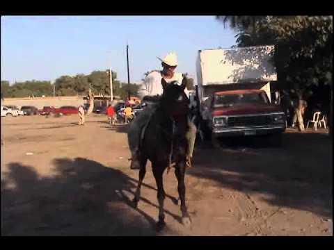 Horse dancing in the town party / Caballo bailando en la fiesta ejidal