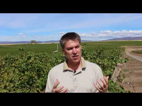 The history of wine in Washington with Columbia Winery winemaker Sean Hails