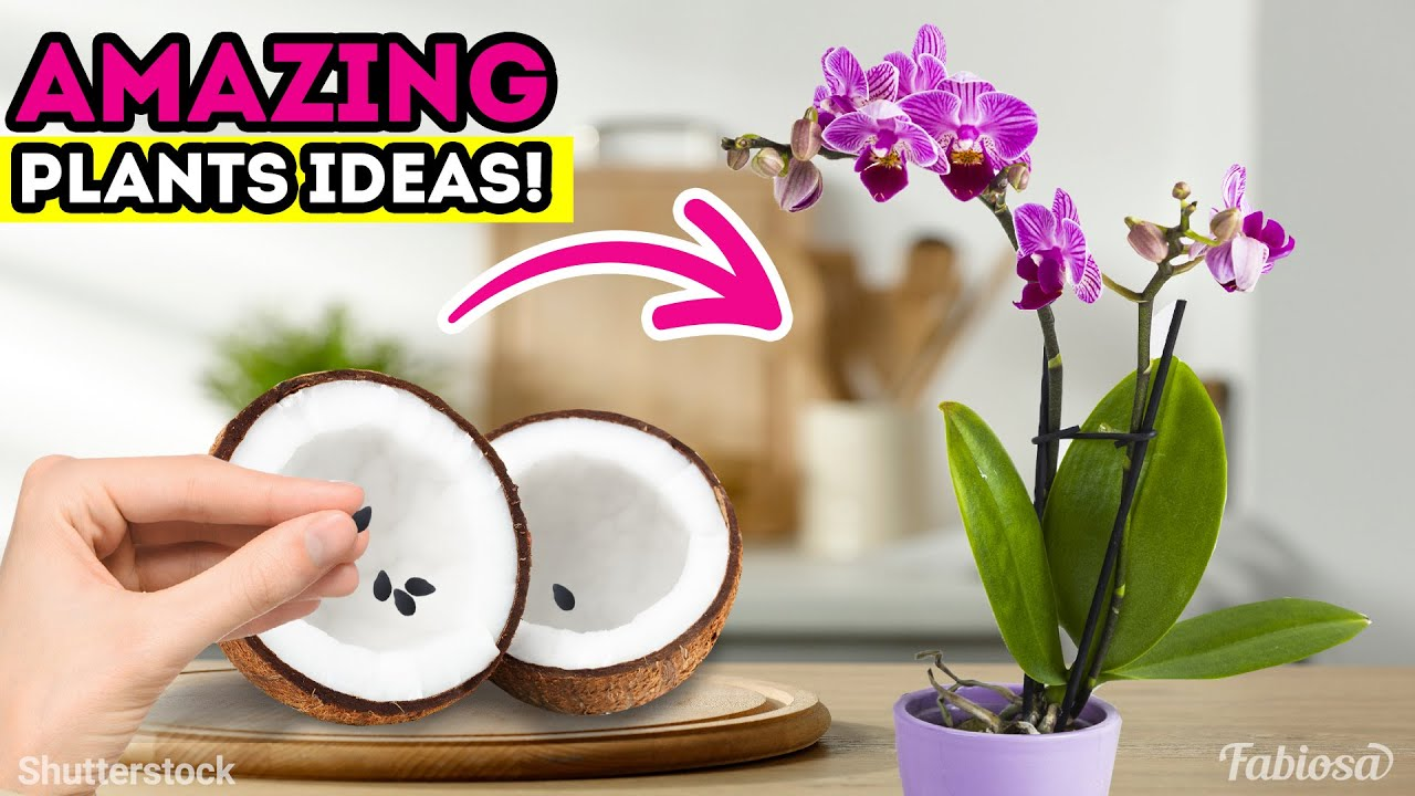 Gardening tips and tricks for lazy people!