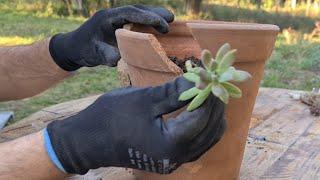 Ideia LINDA com VASO QUEBRADO para plantar SUCULENTAS, Vasos criativos