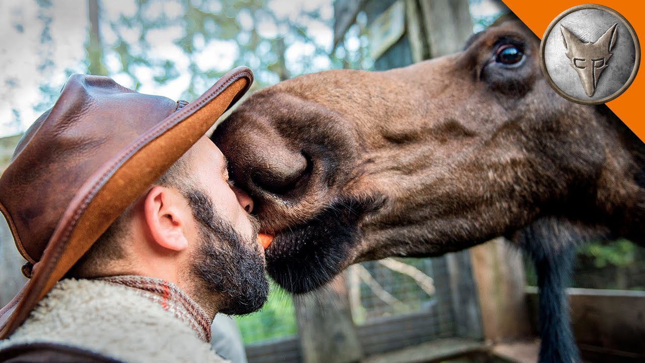 i kissed a moose and i liked it youtube
