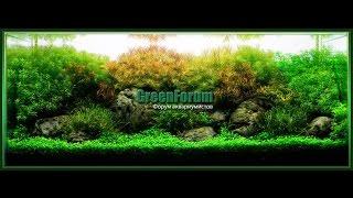 GreenForum - Форум аквариумистов