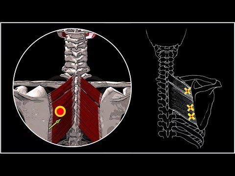 БОЛИТ СПИНА МЕЖДУ ЛОПАТОК 🔴 Большая и малая ромбовидные мышцы ⭐ SLAVYOGA