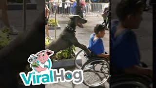 Dog Goes the Extra Mile for Man in Wheelchair || ViralHog