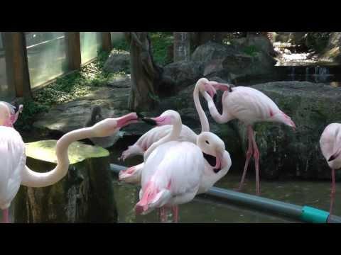 Зоопарк Чианг Май, Тайланд (Chiang Mai zoo, Thailand)